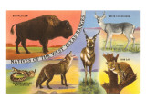 Creatures of the West Texas Ranges Posters