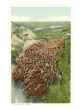 Cattle Drive, Rounding up the Herd Prints