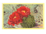 Blooming Prickly Pear Cactus Posters