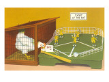 Baseball Playing Chicken Print