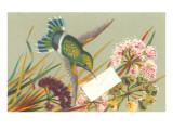 Victorian Hummingbird Poster