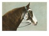 Horse's Head Prints