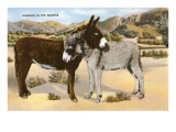 Burros Snuggling, Romance in the Rockies Posters