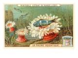 Aquatic Fauna, Sea Anemones Kunstdrucke