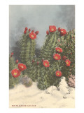 Flowering White Sands Cactus Posters