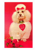 To My Valentine, Poodle with Roses Poster