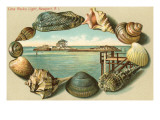 Sea Shells, Lime Rocks Lighthouse, Newport, Rhode Island Prints