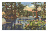 Reelfoot Lake, Memphis, Tennessee Prints