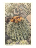 Barrel Cactus Art