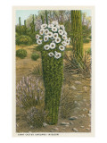 Flowering Saguaro Cactus Prints