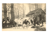 Oxen at Maple Sugar Camp, Vermont Posters