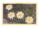 Night-Blooming Cereus Prints
