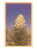 Yucca Bloom Posters