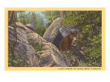 Bear Cub on Rocks, West Virginia Prints