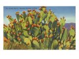 Prickly Pear Cactus in Fruit Prints