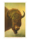 Bison, Yellowstone National Park Art