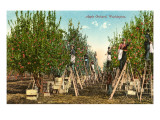 Huerto de manzanas, Washington Arte