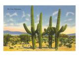 'The Four Horsemen', Saguaro Cacti Kunstdrucke