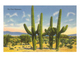 The Four Horsemen, Saguaro Cacti Prints