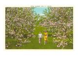 Fleurs de pommiers en Virginie Affiche
