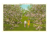 Apple Blossoms in Virginia Print