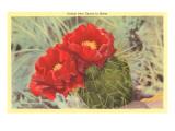 Feigenkaktus mit Blüte Kunst