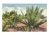 Prickly Pear Cactus and Agave Prints
