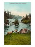 Upper Tumwater Falls, Olympia, Washington Prints