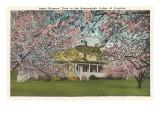 Apfelblüten, Shenandoah-Tal, Virginia Kunstdruck