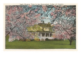 Apple Blossoms, Shenandoah Valley, Virginia Poster