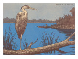 Great Blue Heron Perched on Log Posters