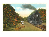 Locomotive Going through Orange Graves Prints
