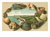 Sea Shells, Cliff Walk, Newport, Rhode Island Poster