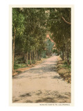 Path in Old Rancho Santa Fe, California Kunstdruck