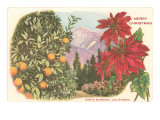 Merry Christmas, Poinsettias, Santa Barbara, California Print