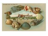 Sea Shells, Hotel del Coronado, San Diego, California Poster
