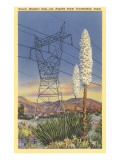 Power Lines and Yuccas Prints