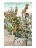 Apple Tree, Spokane, Washington Art