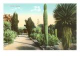 Cactus Garden Posters