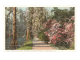 Magnolia on the Ashley, Charleston, South Carolina Art