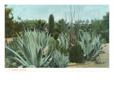 Cactus Garden with Agave Kunstdrucke