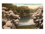 Rhododendron, State Flower of Washington Prints