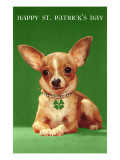 Chihuahua with Shamrock Collar Posters