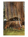 Giant Cedar Tree, Washington Poster