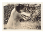 Blurry Photo of Fox Terrier Prints