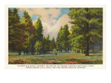 Kaibob National Forest, Cedar City, Utah Posters