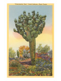 'Watermelon Tree', Freak Saguaro Cactus Poster