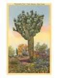 Watermelon Tree, Freak Saguaro Cactus Posters