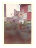 Blurry Picture of Cat in Yard Prints