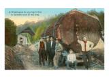 Fir Log, Lumberjacks, Washington Prints